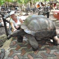 Занзибар. Черепахе - 158 лет. :: Елена Савчук