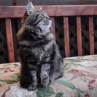 Коте-1. :: Руслан Грицунь