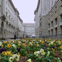 Дождь. Тихая улочка в Вашингтоне... :: Юрий Поляков