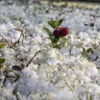 Первый снег :: Юрий Лутов