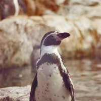 Пингвинчик :: Marika Hexe