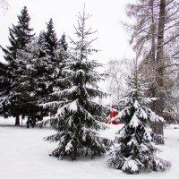 Белый, белый снег.... :: раиса Орловская