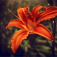 Аленький цветочек :: Евгений Кочуров