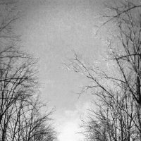 Одиночество. :: Анна Пацеева