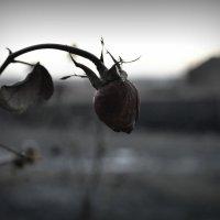Нежный сон природы.... :: Ирина Жеребятьева
