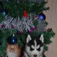 наш новогодний подарок :: Светлана