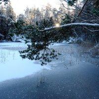 Зима пришла! :: Swetlana V
