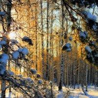 Прощалось солнце с декабрём... :: Лесо-Вед (Баранов)