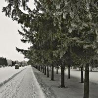 Зимние зарисовки 13 :: Алексей Масалов