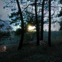 Сумерки в лесу. :: Валерий Изотов