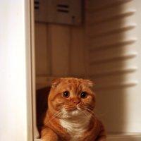 А где еда?! Да вы совсем меня не жалеете! :: Ирина Румянцева