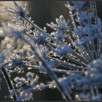 цветы зимы :: liudmila drake