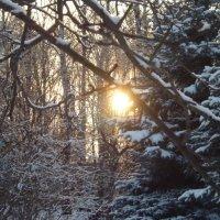 Зимой в парке. :: шубнякова