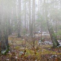 Туман... :: Александр Филатов