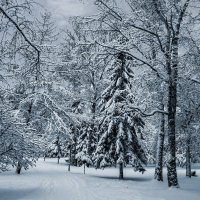 Снег :: Nn semonov_nn