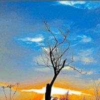 Одиночество :: Андрей Аблеков