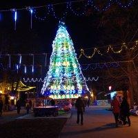 елка в парке :: юрий иванов