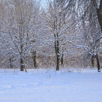 Зимние,сельские зарисовки-2 :: Любовь