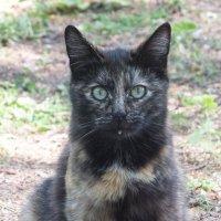 кошка :: Ирина -