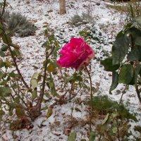 Лютая зима, 1 января! Выпало целое ведро снега! Держится... :: Александр Скамо