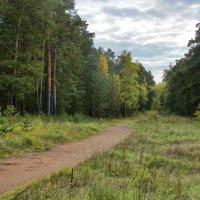 Из леса, вестимо. :: Александр Садовский