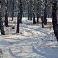 Дорога в зимнем березнике.. :: Юрий Анипов