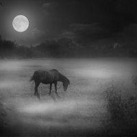 Выйду ночью в поле с конем... :: Катерина Лебедева