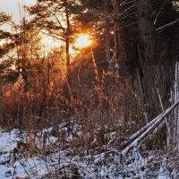 Морозный рассвет :: Николай Белавин