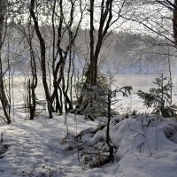 Лес у туманной реки :: Ольга