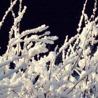 Снежные заросли :: Swetlana V