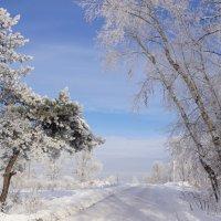 Зимняя дорога :: Наталия Григорьева