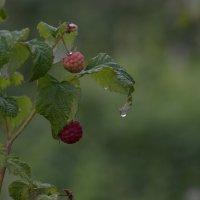 Дождь прошёл :: михаил суворов