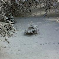 В лесу родилась ёлочка ... :: Леонид Сергиенко