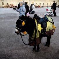 один пони :: sv.kaschuk