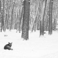 Зимний парк :: Светлана -