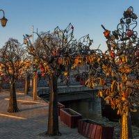 Деревья с замками :: Игорь Вишняков