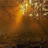 Утро на опушке :: Alexander Andronik