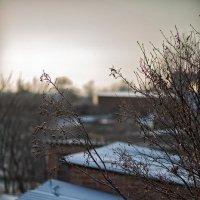 Зимнее утро :: Сергей