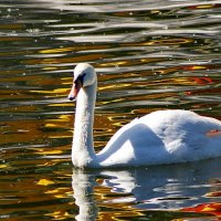 Они, почти как люди… :: kolin marsh