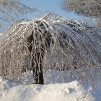 Зимняя пальма :: Ольга Чистякова