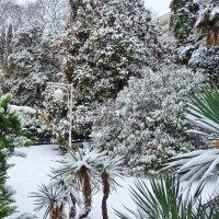 Решила все таки зимушка порадовать и Нас Сочинцев своими белыми одеяниями!!! :: СветЛана D