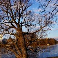Природа, фотосъемка. Калининград. Нижнее озеро. :: Murat Bukaev