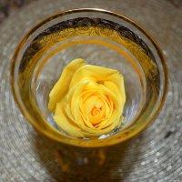Роза жёлтая :: Людмила