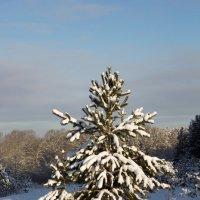 в снегу :: Валентина Коннова