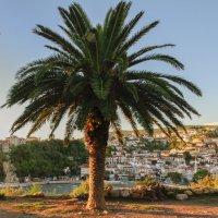 Одинокая пальма растет :: Gennadiy Karasev
