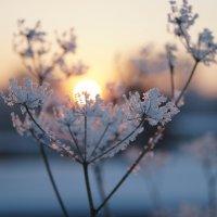 Мороз и солнце :: Татьяна Исаева