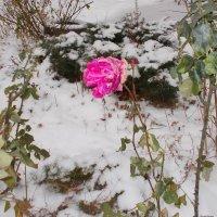 Лютая зима, 4 января. Наши не сдаются! :: Александр Скамо