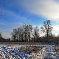 зима. березки :: Артем Тимофеев