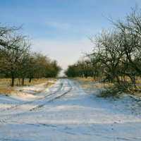 Сад зимой :: Артем Тимофеев
