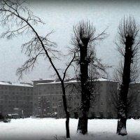Зимняя графика :: Виктор Никитенко